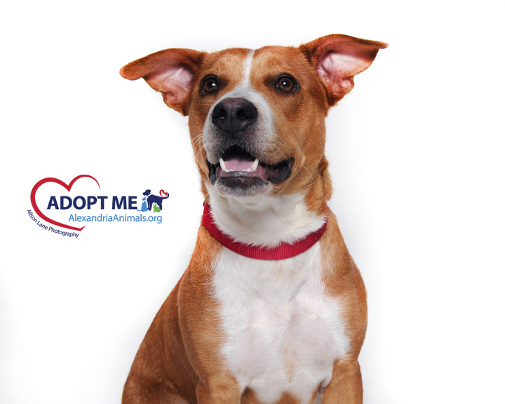 August Pets of the Month