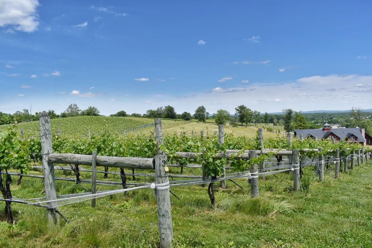 Meet Northern Virginia's Newest Wineries