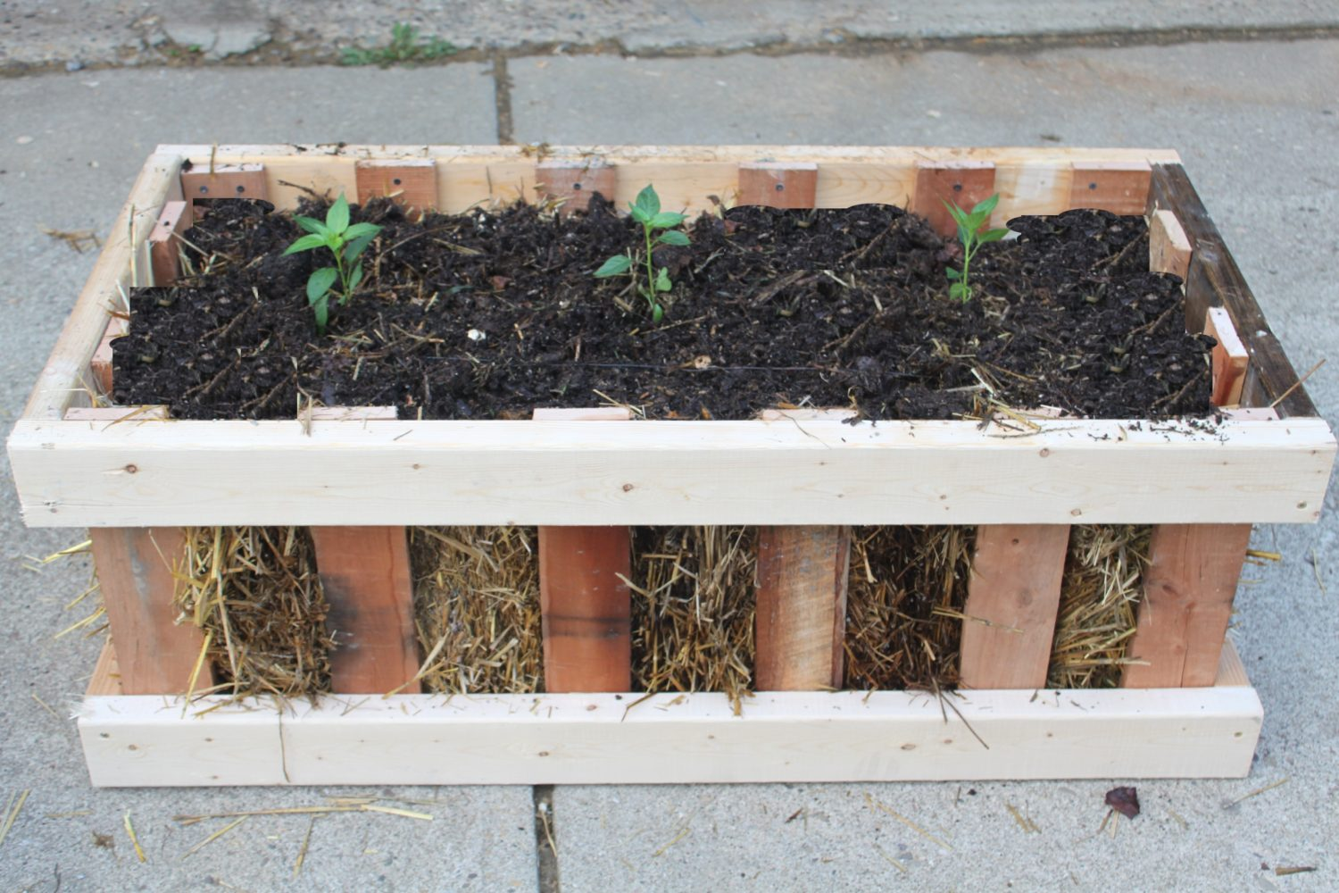 The straw bale pallet crate garden simple attractive for Gardening using pallets