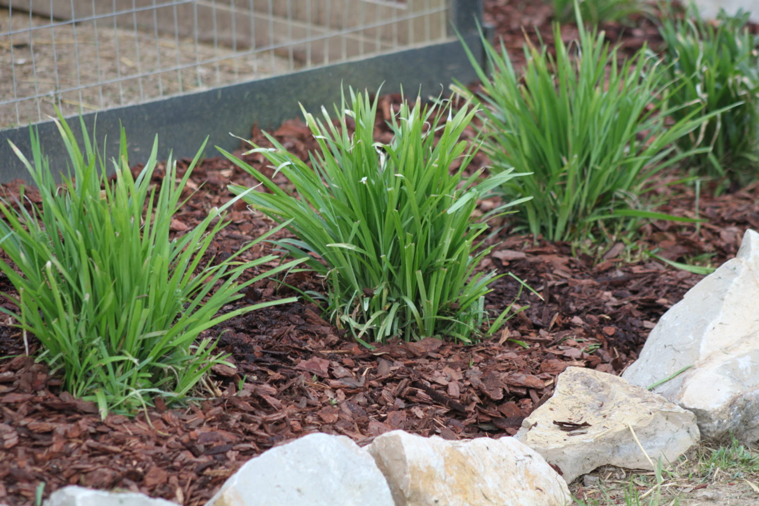 The basics of mulch what where how and why to use in for How to landscape a garden
