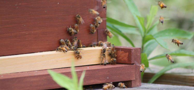 Preparing The Honeybee Hives For Winter