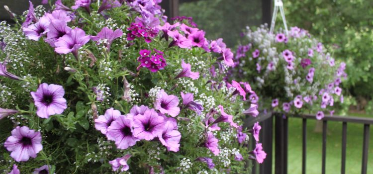 Keeping Potted Plants and Hanging Baskets Beautiful All Summer Long At The Farm