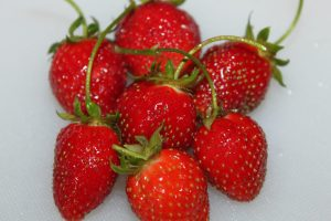 Some of the strawberries picked from the patch at the farm.