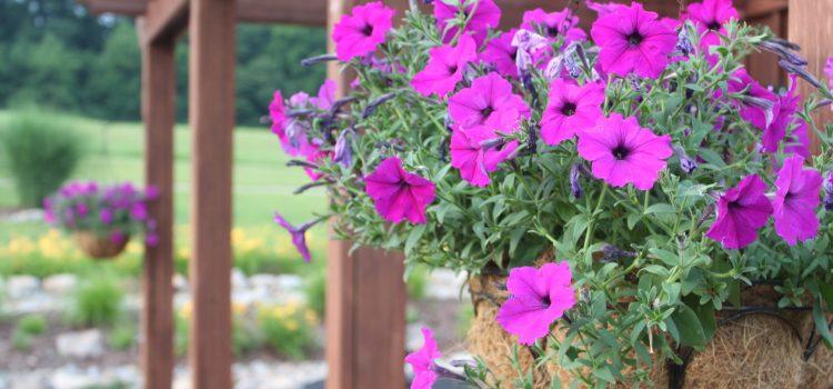 Early Summer Photos From The Farm – A Look Around The Farm And Garden
