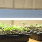 seed starting rack
