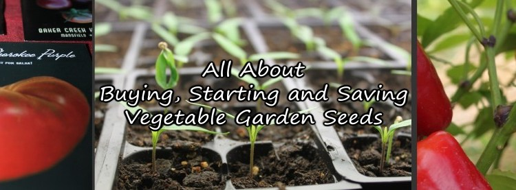 All About Buying, Starting and Saving Vegetable Garden Seeds