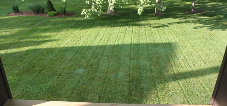 6 Tips To A Great Lawn – Without Chemicals!