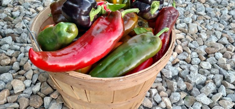 Our Top 4 Veggie Plants From This Year – Reviewing The 2015 Garden