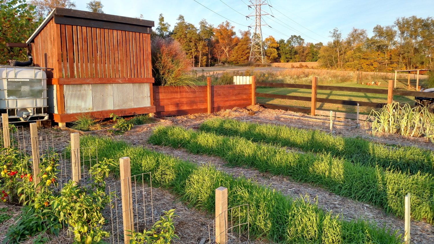 the one must do fall chore for your garden plant cover crops