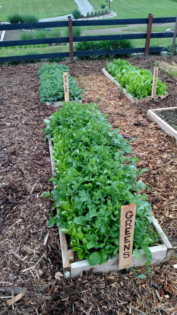 Weeds In Vegetable Garden Part - 38: A Weed Free Garden Allows Your Plants To Get All Of The Nutrients U2013 Not The  Weeds!