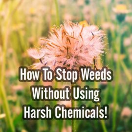 3 Great Ways To Stop Weeds This Year Without Using Harsh Chemicals