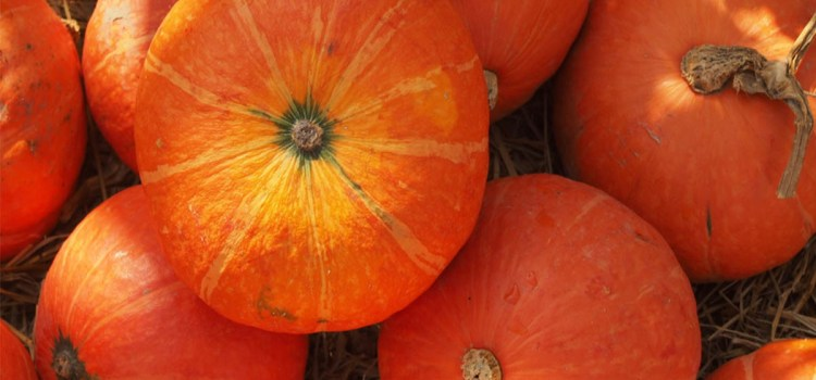 Growing Pumpkins – How To Grow A Great Pumpkin Crop This Year