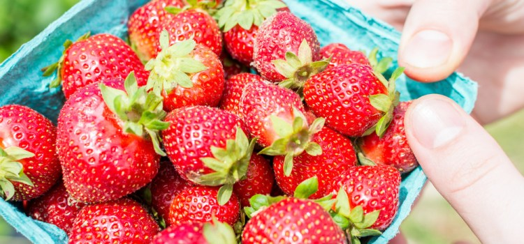 3 Great Ways To Preserve Strawberries – And How To Store Fresh!