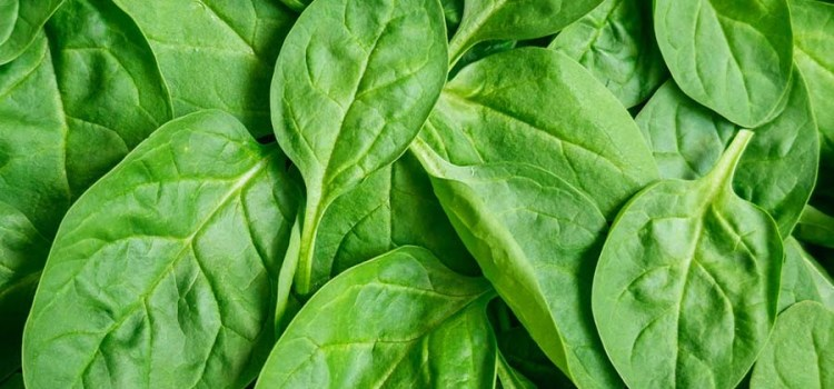 How To Easily Freeze Spinach – A Great Way To Preserve Fresh Spinach