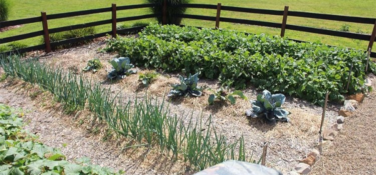 How To Eradicate Weeds From Overtaking Your Garden. Make Gardening Easy!