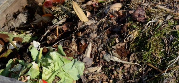 How To Create A Great Fall Compost Pile For Next Year's Garden!