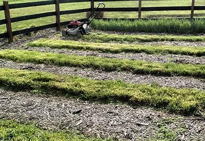 No Till Garden Cover Crops