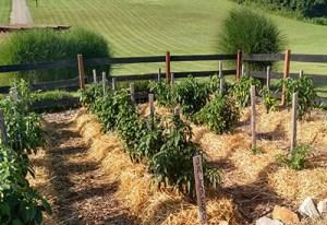 no till garden cover crops - Garden Cover