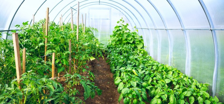 DIY Greenhouse – How To Create An Attractive, Economical Hoop House