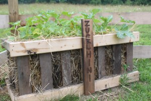 Container or straw bale gardening can work for those with little space