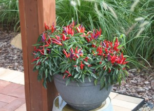 Potted plants on a patio or deck can yield plenty of peppers, tomatoes and other vegetables and are easier to maintain than a full-fledged garden