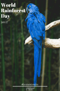 world rainforest day - sustainable holidays - Old World New