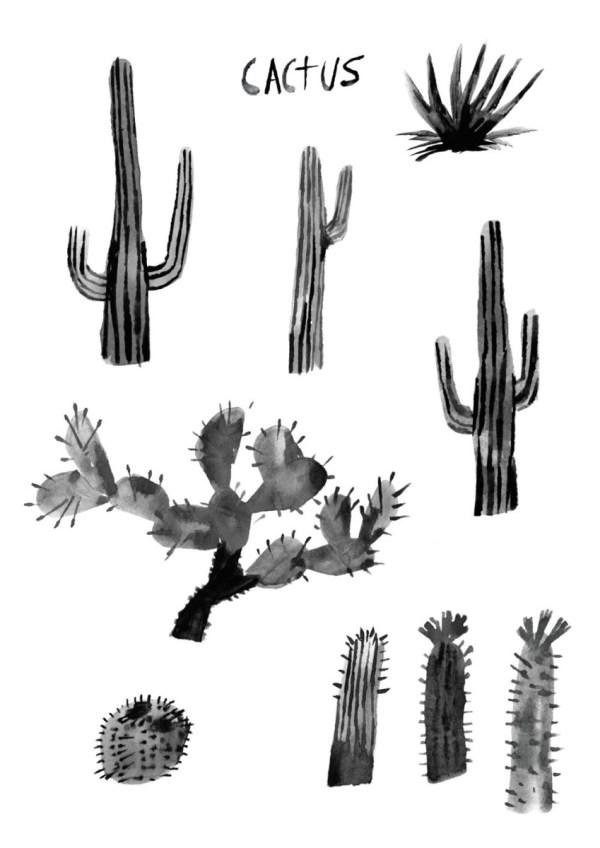 black cactus illustration