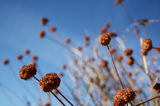 _fall-hike-14