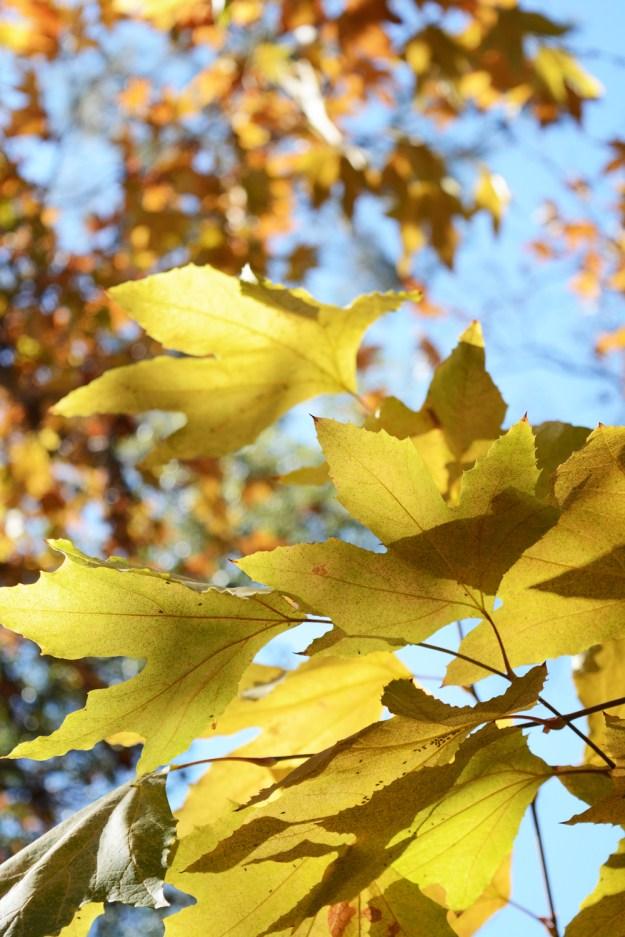 _fall-hike-2