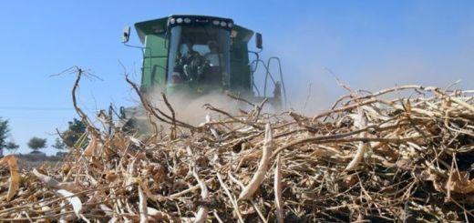 Han agotado los recursos para apoyar a productores de frijol