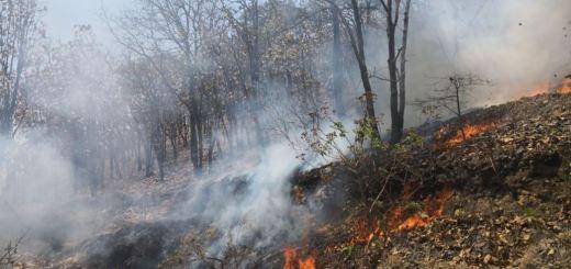 Suman 18 incendios forestales en lo que va del año en Sinaloa: Conafor