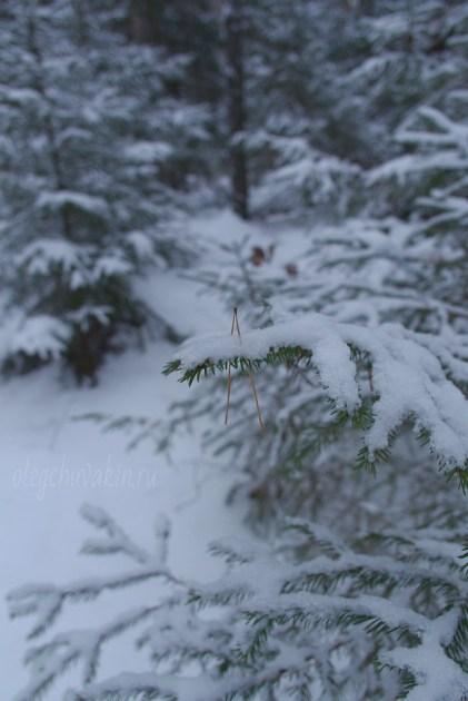 Снег на еловых ветках, фото, Олег Чувакин, 5