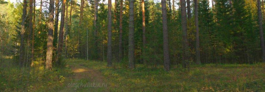 Зелёный лес, зелёный снег, Дэвид Линдсей, Путешествие к Арктуру, Торманс, Иван Ефремов
