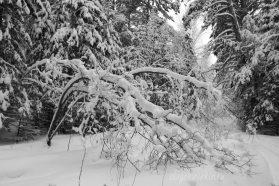 Зимний лес, красота, январь, красивые фотографии