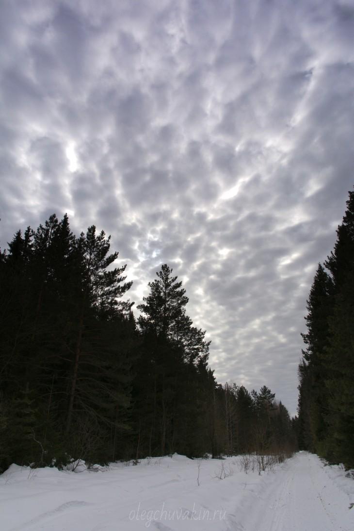 Сибирь, лес, небо, фото, март, Олег Чувакин