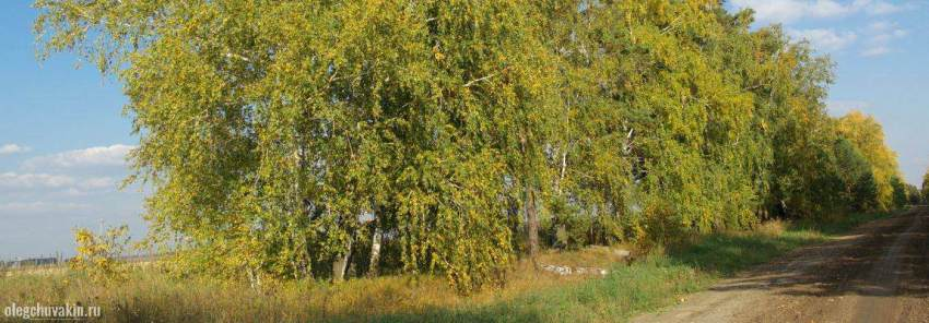 Осень, сентябрь, машина времени, барахолка, рассказ, Олег Чувакин