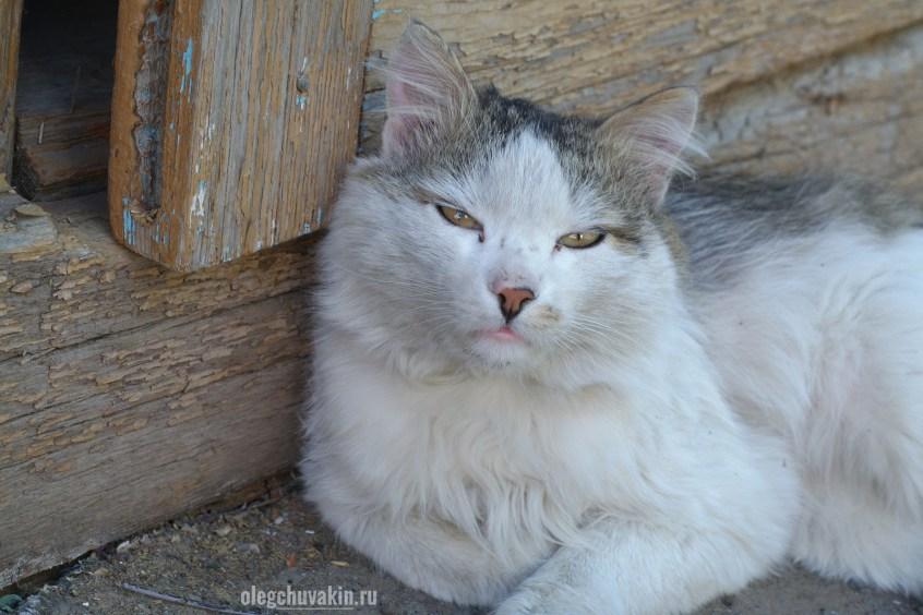 Кот, весенние бои, усталый, фото, портрет, Зигзаг