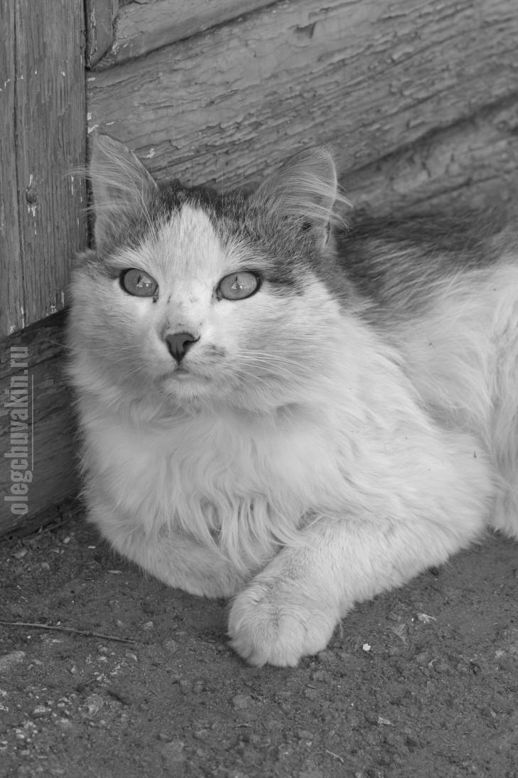 Кот, Зигзаг, фото, 2016, май