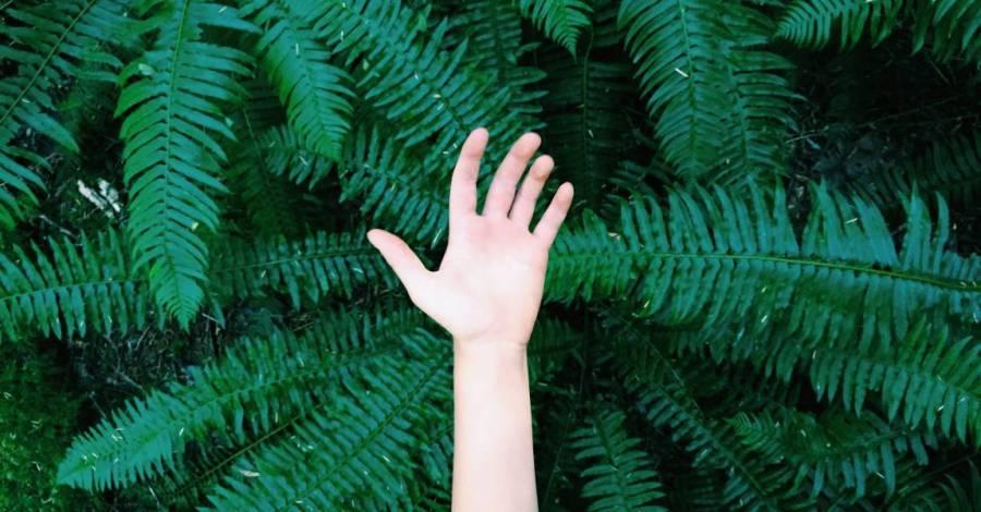 Папоротник, человек, рука, лес, фото