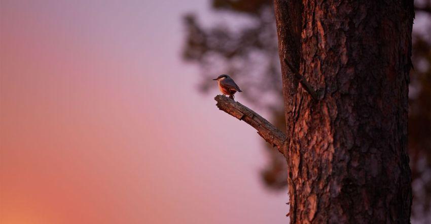 Птица, ветка, дерево, фото, иллюстрация