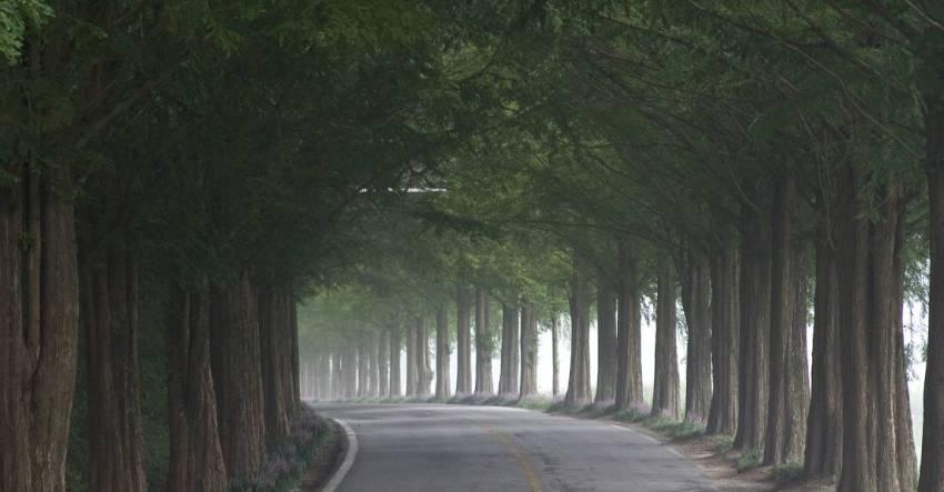 Тоннель из деревьев, дорога, деревья, парк, фото, иллюстрация