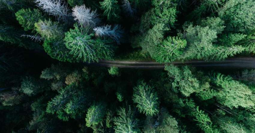 Лес, дорога, вид сверху, фото, иллюстрация