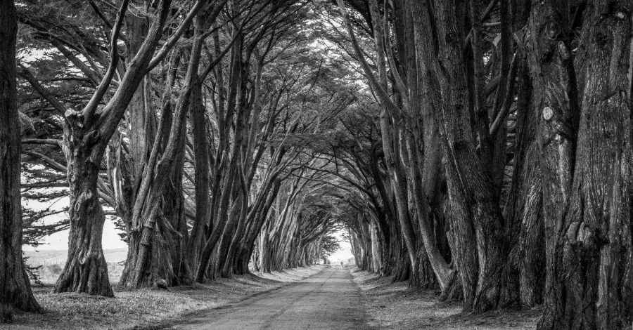 Страшный лес, деревья, серые, без красок, фото