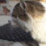 Кот, профиль, Зигзаг, 8 сентября 2017