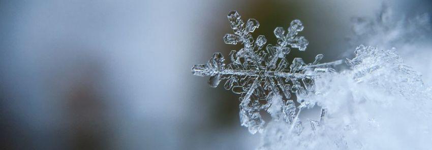 Снежинка, ёлка, игра в шашки, Новый год, фото