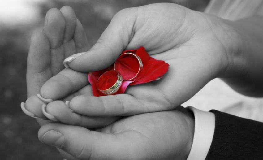 Свадебные кольца, руки, любовь, лепестки роз