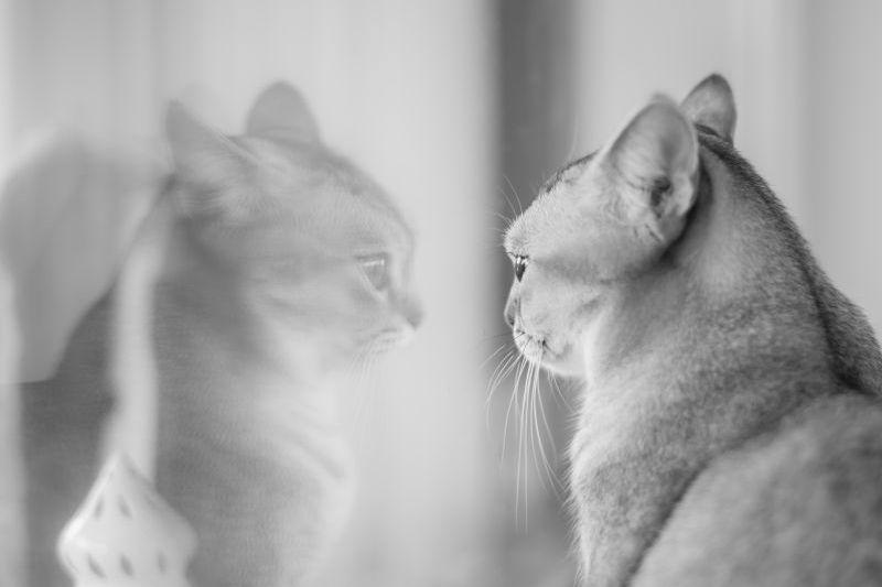 Кот, зеркало, отражение, любовь, редактор, автор, уважение