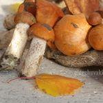 Горка красноголовиков, грибной урожай, август, фото