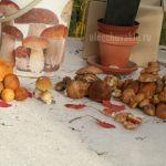 Подосиновики, белые грибы, подберёзовики, маслята, рыжики, сыроежки, фото