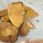 Моховики, грибы, фото, осень